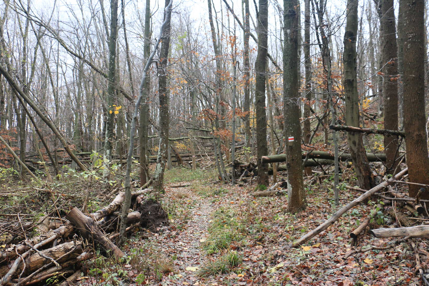 Erdő domb randevúk