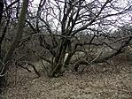 A rejtekadó fa tél végén