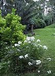 gyönyörű, parkosított kert