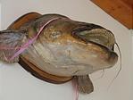 Van halászlé is!!! ha fognak a horgászok :-)