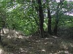 A fák mögött egy kb 4 m átmérőjú víznyelő embert elnyelő lyukkal