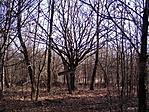 Mögötte halott fák :-(