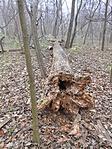 A rejtekadó fa