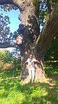 Rejtő a Nagy fával